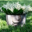 Tradition et Avenir vous souhaite un bon 1er Mai